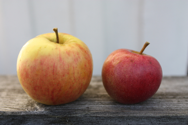 Två av fyra äpplesorter från vår trädgård. Någon som vet vad de heter?