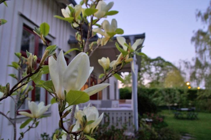 magnolia6G8A6654