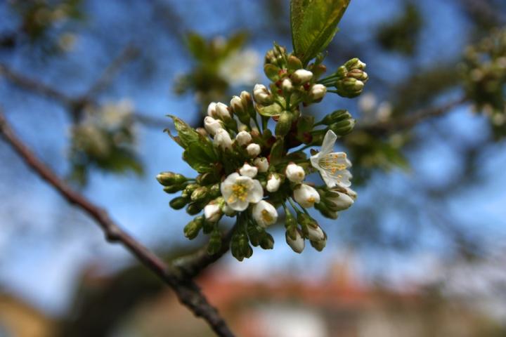 blommor_0818