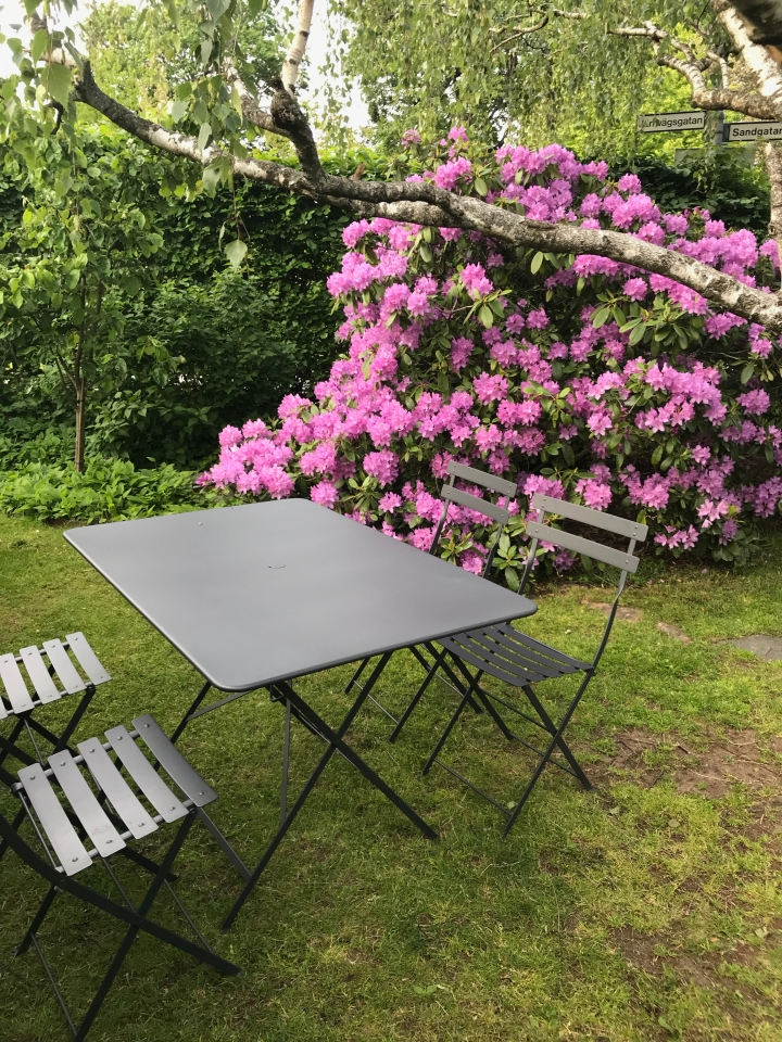 rhododendron_4728