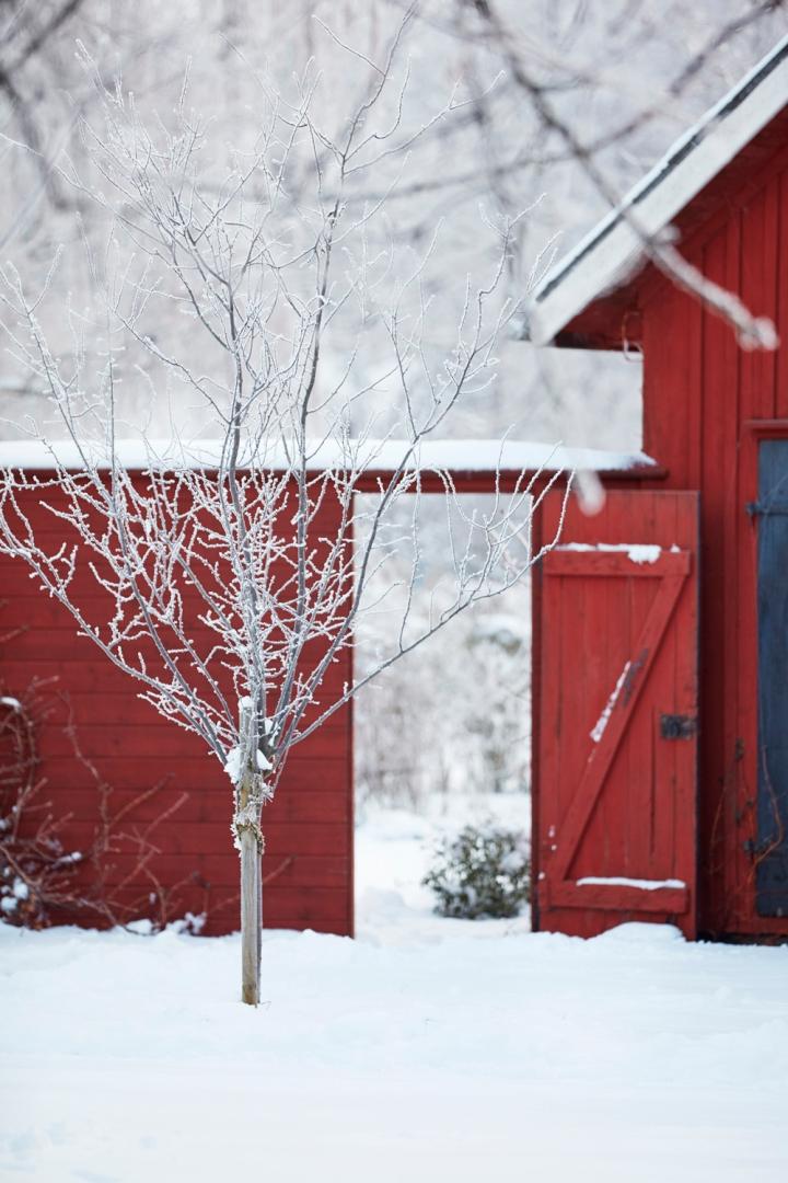Solhaga vinterreportage