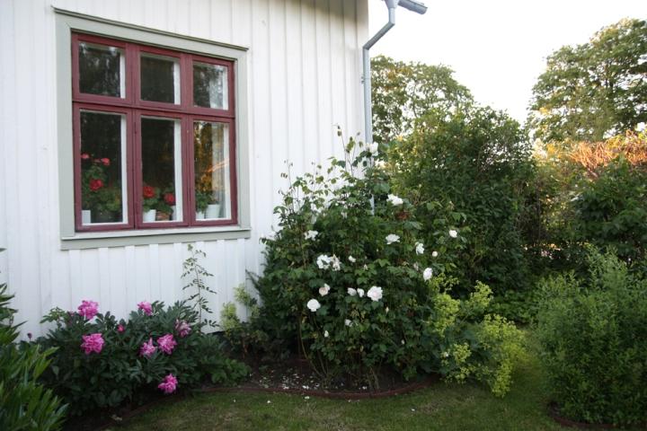 rosenhorn_6279
