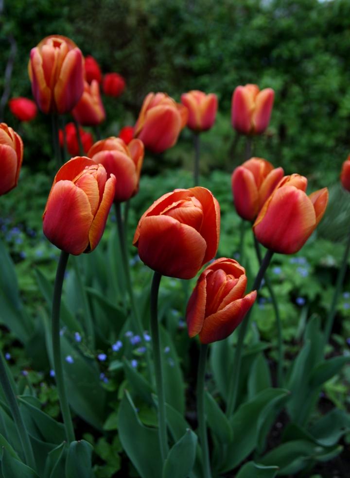 orangerod_6006